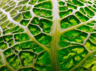 Nervenschmerzen mit der Bioenergetischen Therapie behandeln